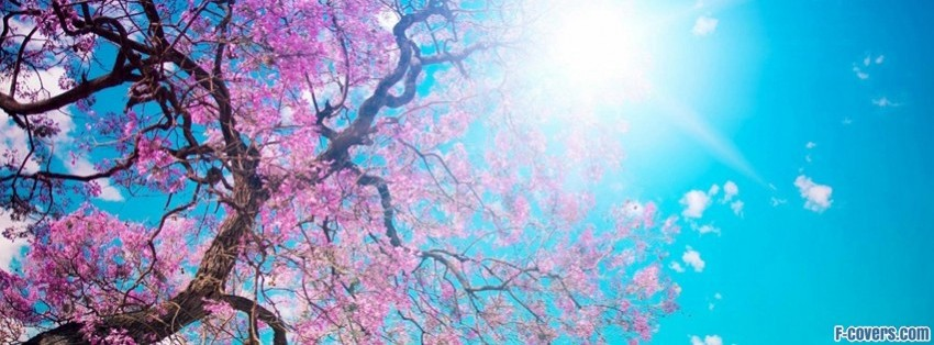 spring-sunshine-facebook-cover-timeline-banner-for-fb.jpg