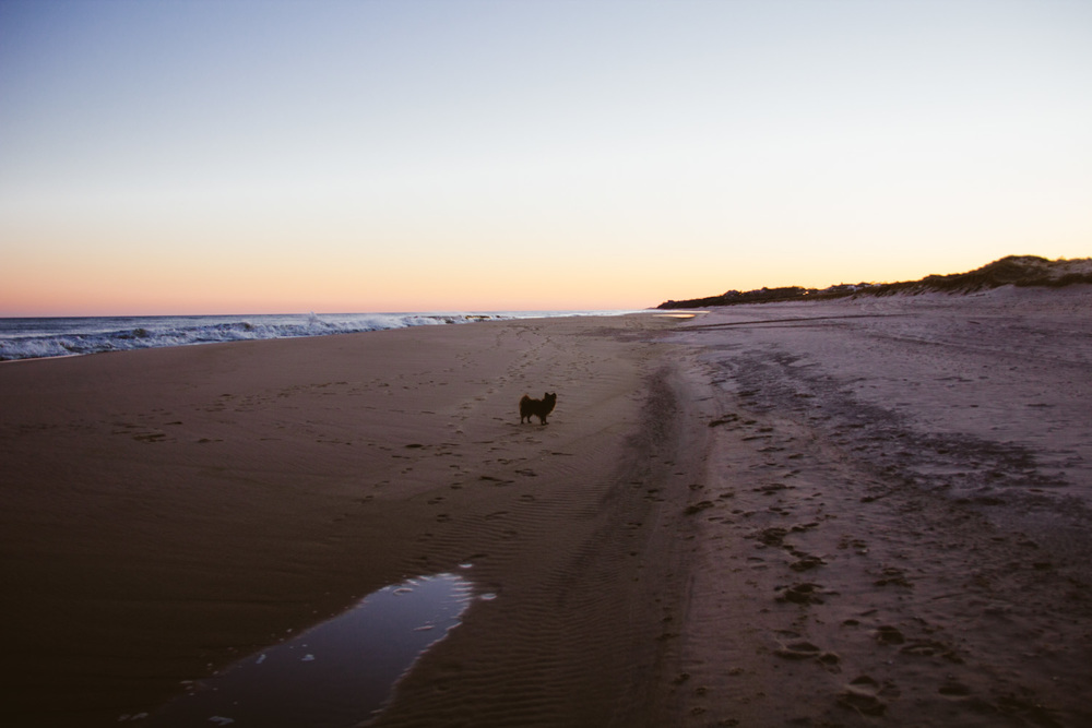 Kleine explores the beach