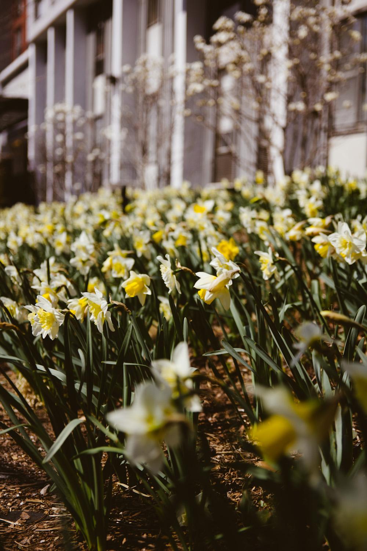 spring__005.jpg