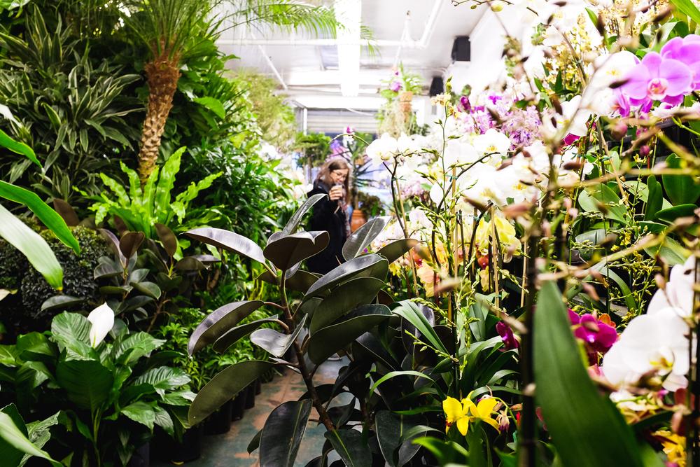 brodo_flower-market_160312_002.jpg