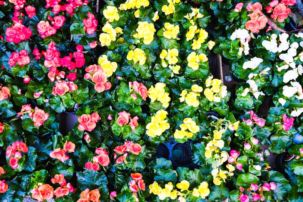 brodo_flower-market_160312_004.jpg