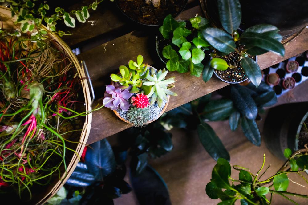 brodo_flower-market_160312_011.jpg