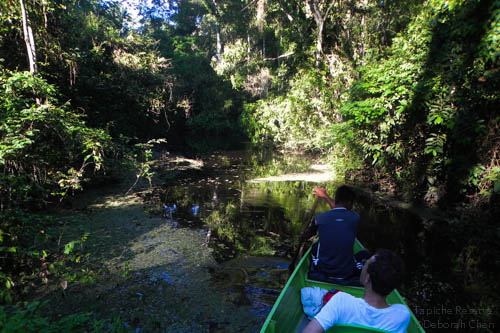 Paddling silently through the flooded forest