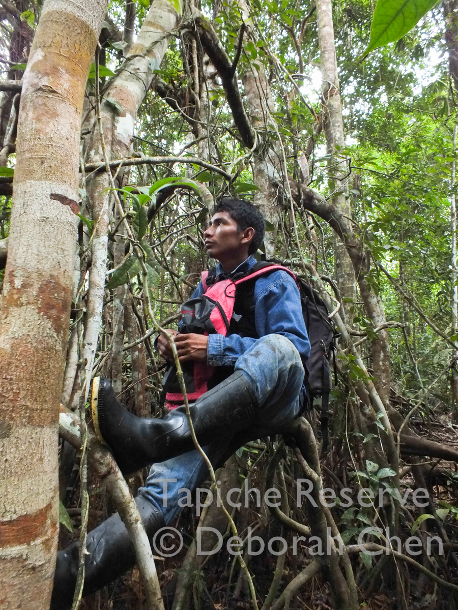A native of Iquitos, Carlos had never been to primary rainforest before coming to the reserve, where he learned to walk in the jungle and heard howler monkeys for the first time.