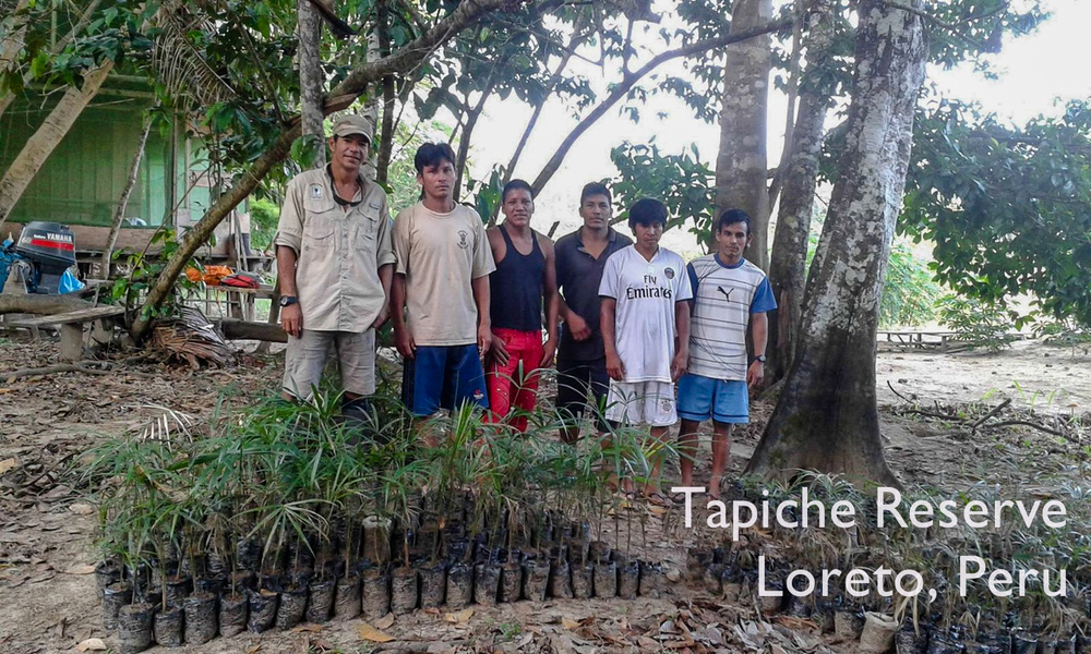Murilo with the first Acai Project team made up of members from local riverside communities. Tapiche Reserve Jungle, Peru