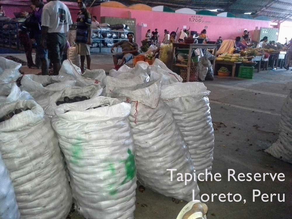 Our eco-harvested aguaje for sale at the Mercado de Productores in Iquitos. Tapiche Reserve Jungle, Peru