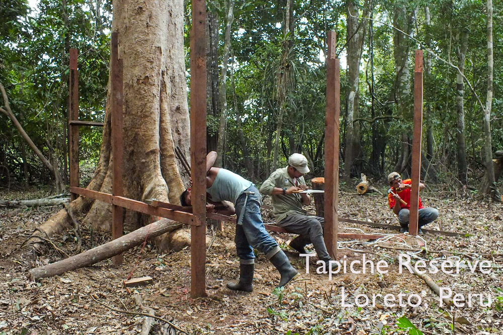 Construction of our Jungle Canopy Observation Tower begins! Tapiche Reserve Jungle, Peru
