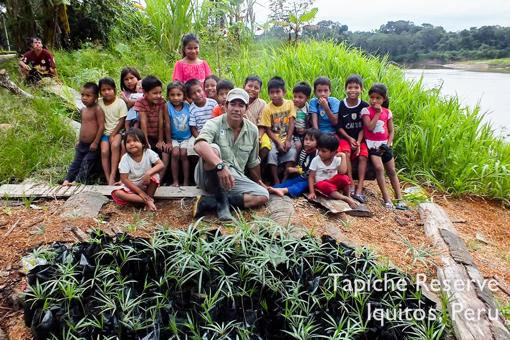 Children of the jungle community of Esperanza help gather açaí seedlings for the Tapiche Reserve, Peru