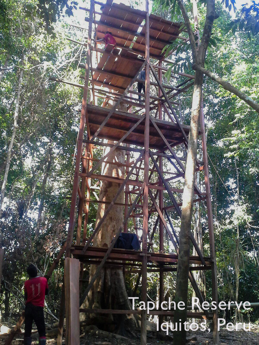Board by board, our Jungle Canopy Observation Tower gains another level! Tapiche Reserve Jungle, Peru