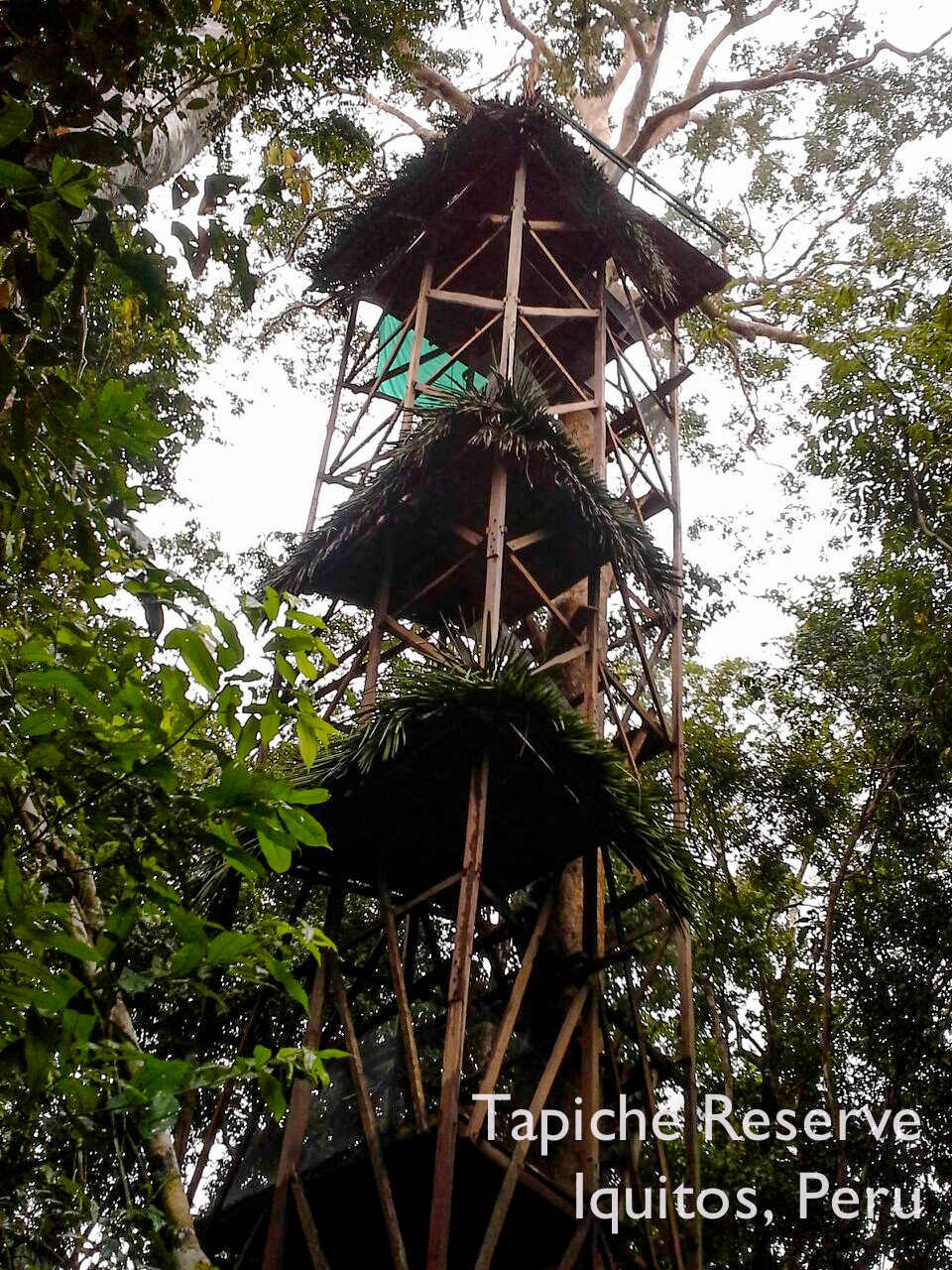 Completed 32m Canopy Observation Tower! Tapiche Reserve Jungle, Peru