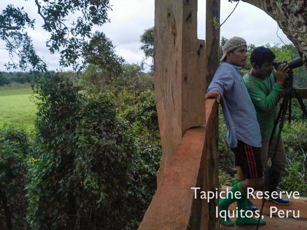 Expansive views over the canopy and lagoon, Tapiche Reserve Jungle, Peru