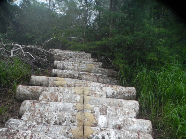 When I find cut logs on Tapiche Reserve property, I cut them in half so they are worthless at market and the cutters feel they are wasting their time and energy cutting our trees.