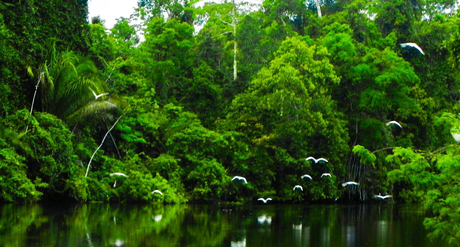 tapiche jungle reserve iquitos peru