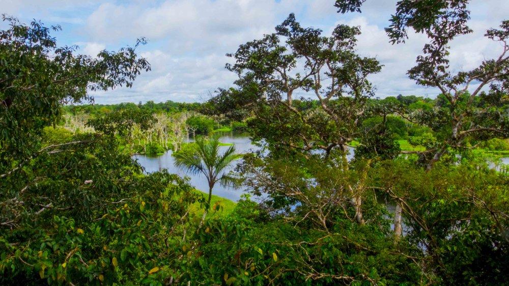 Tapiche-Amazon-Jungle-Tour-Peru-View-Canopy-Observation- & Canopy Observation Tower - Tapiche Jungle Reserve Iquitos Peru