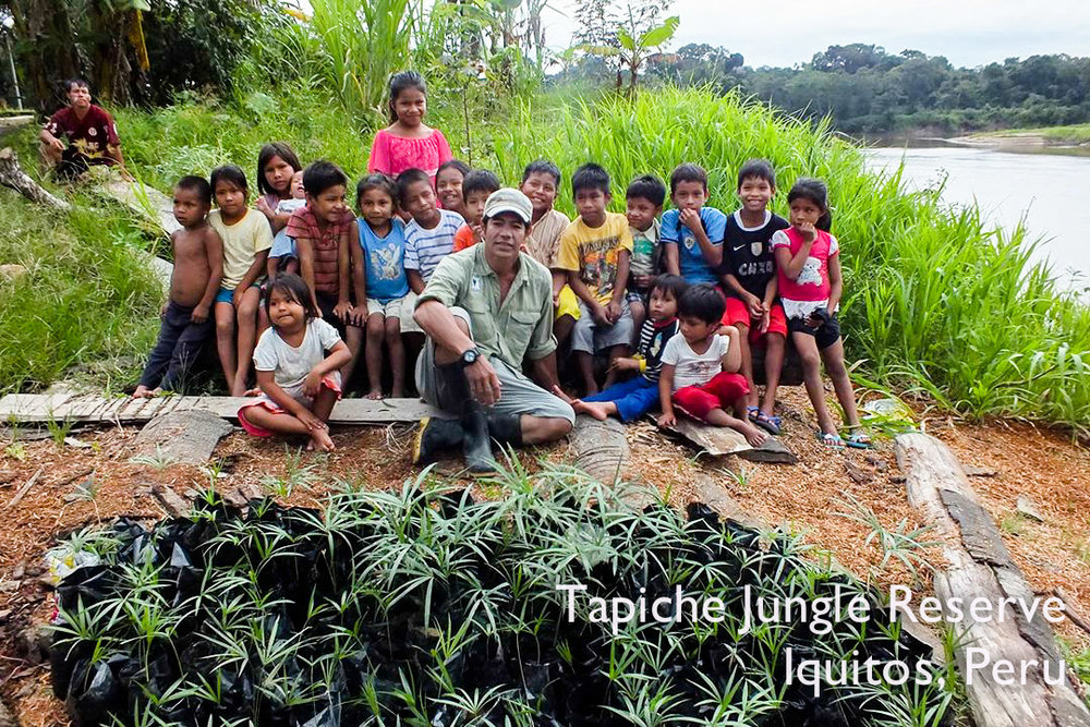 Murilo lets the curious kids help prepare acai saplings for planting
