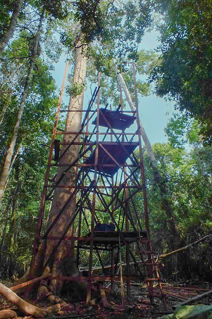 Tapiche-Amazon-Jungle-Tour-Peru-canopy-observation-tower-6.jpg