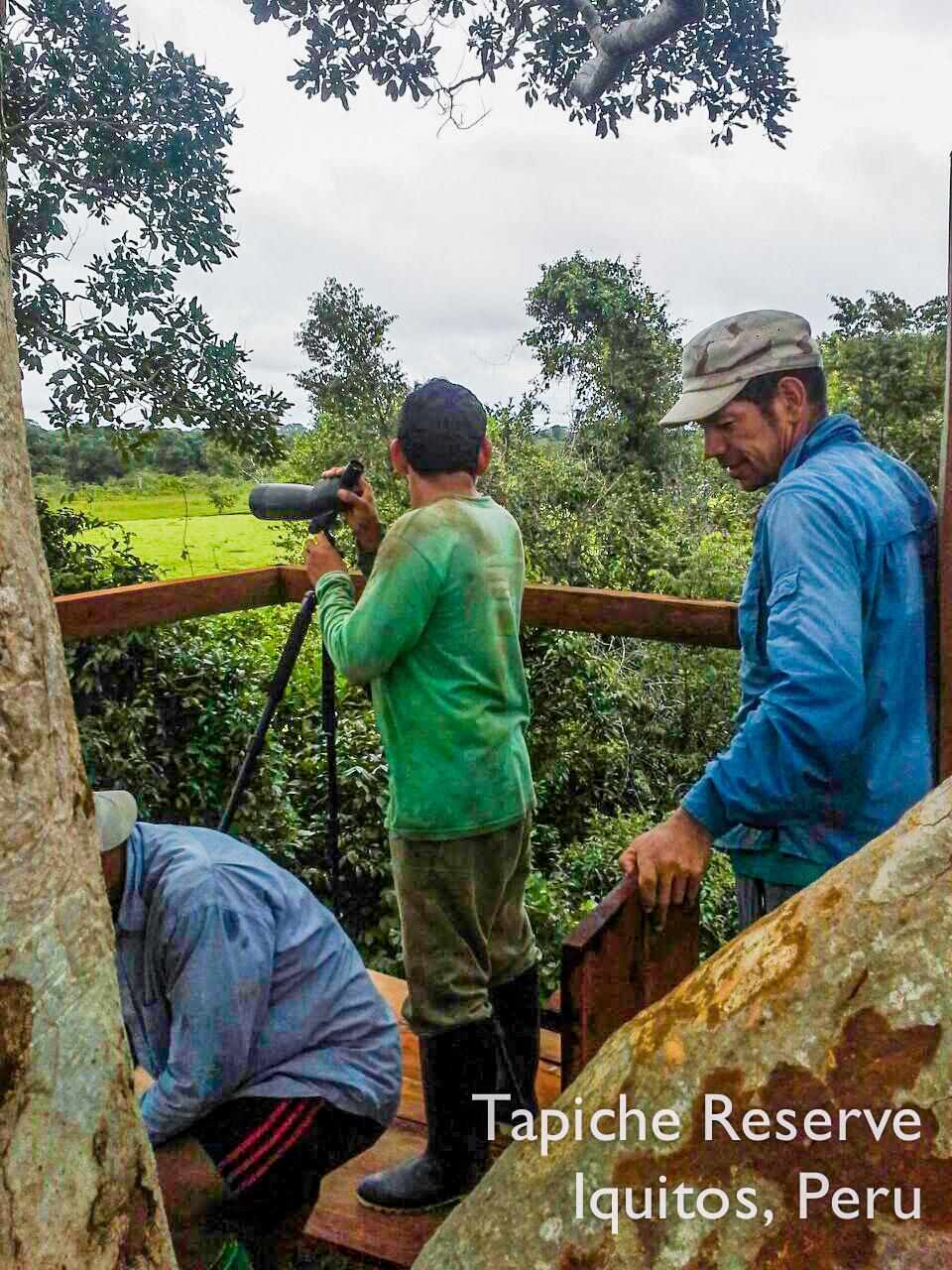 Tapiche-Amazon-Jungle-Tour-Peru-canopy-observation-tower-8.jpg