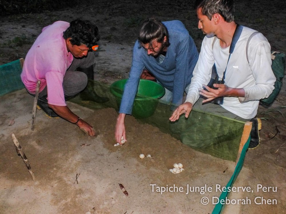 Tapiche-Amazon-Jungle-Tour-Peru-turtle-egg-rescue