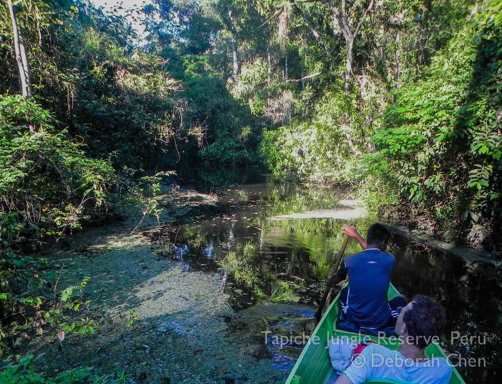 Paddling silently through the flooded forest at the Tapiche Jungle Reserve, Peru