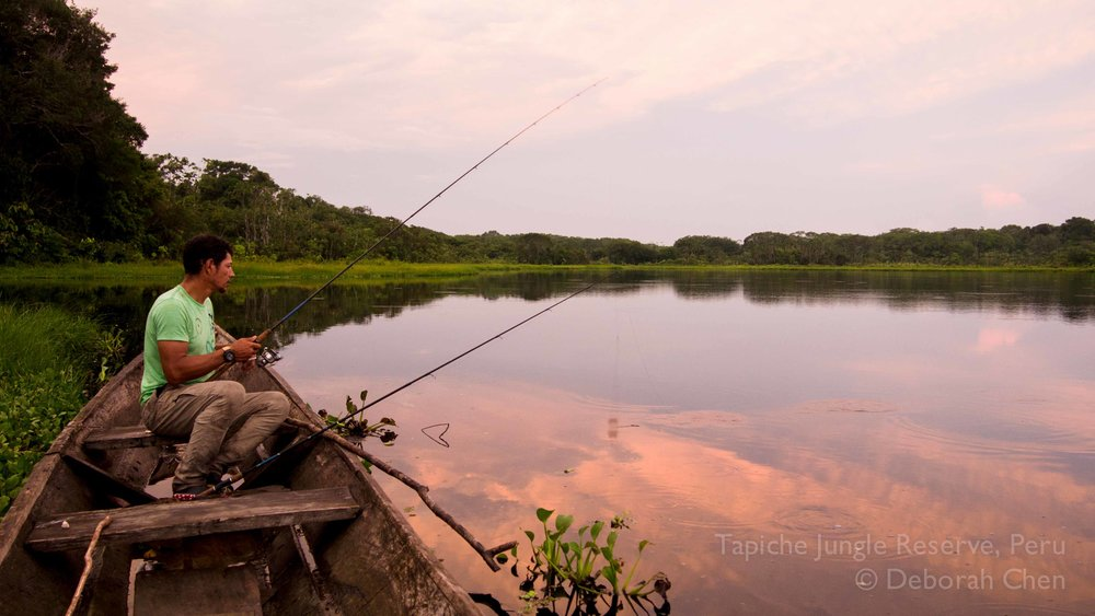 Specialized sport fishing is available with private guide, contact us to tailor a jungle adventure to your liking! Tapiche Jungle Reserve, Peru