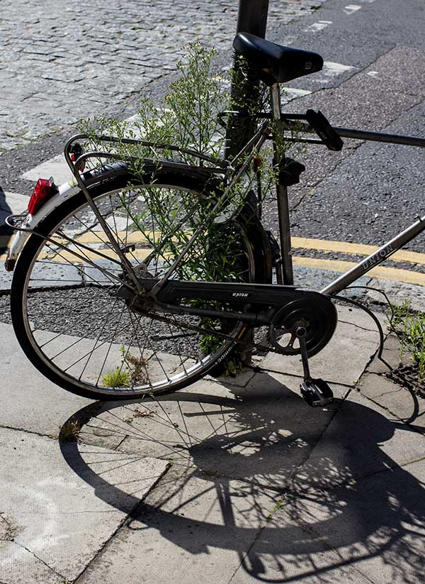 Any bike left on Columbia Road will eventually take root.