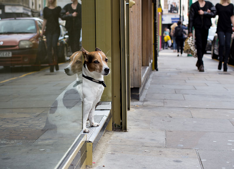 This little pooch might not be much of a guard dog, but he's got character.