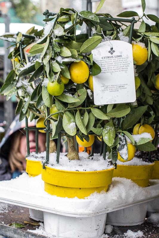 Freezing Lemons!