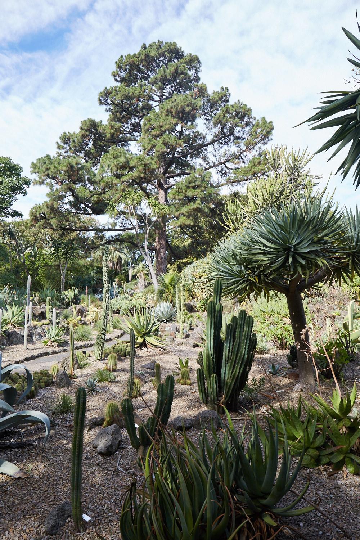 Melbourne-Botanical-Gardens2994.jpg
