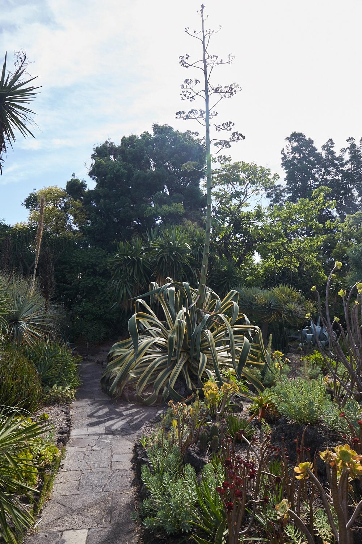 Melbourne-Botanical-Gardens2997.jpg