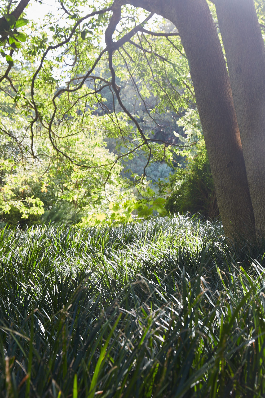 Melbourne-Botanical-Gardens3017.jpg