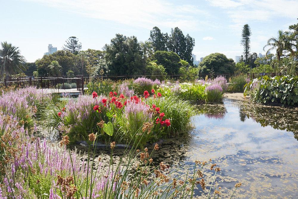 Melbourne-Botanical-Gardens2988.jpg