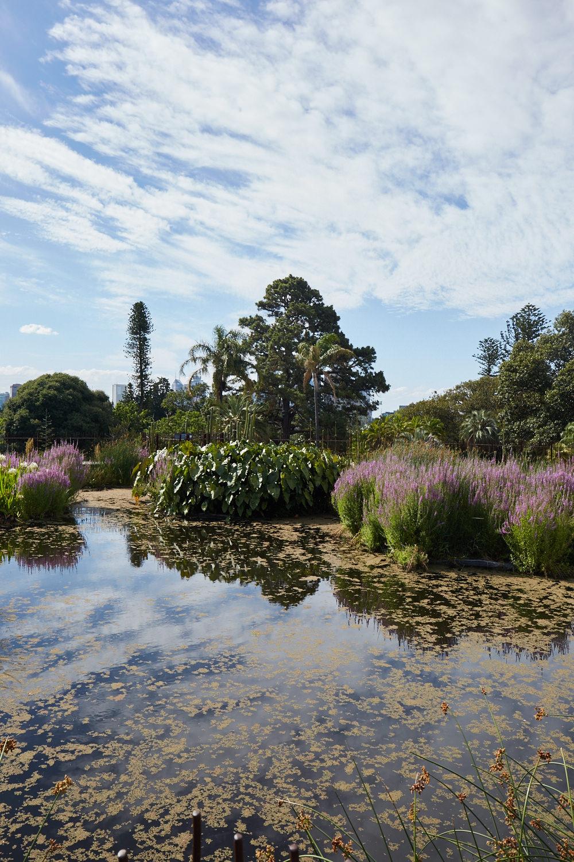 Melbourne-Botanical-Gardens2989.jpg