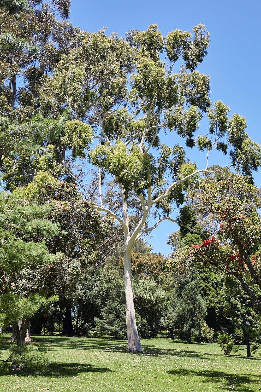 Melbourne-Botanical-Gardens2960.jpg