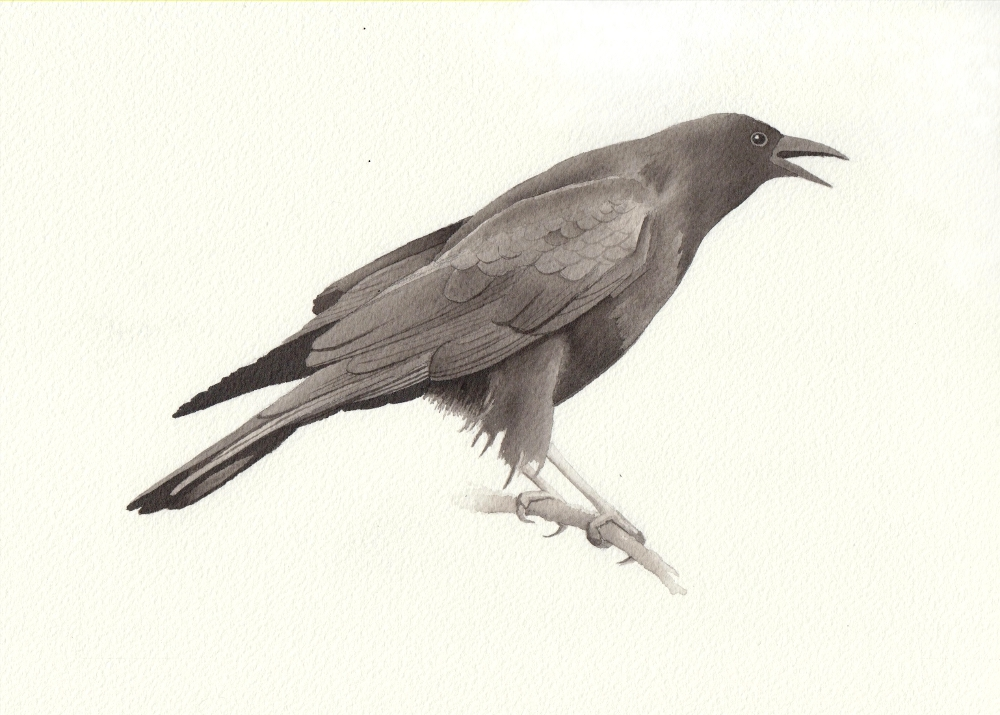 bird7 - reduced.jpeg