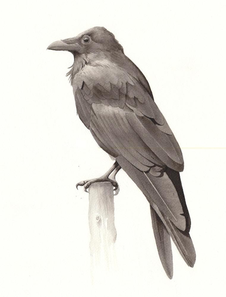 bird5a-reduced.jpeg