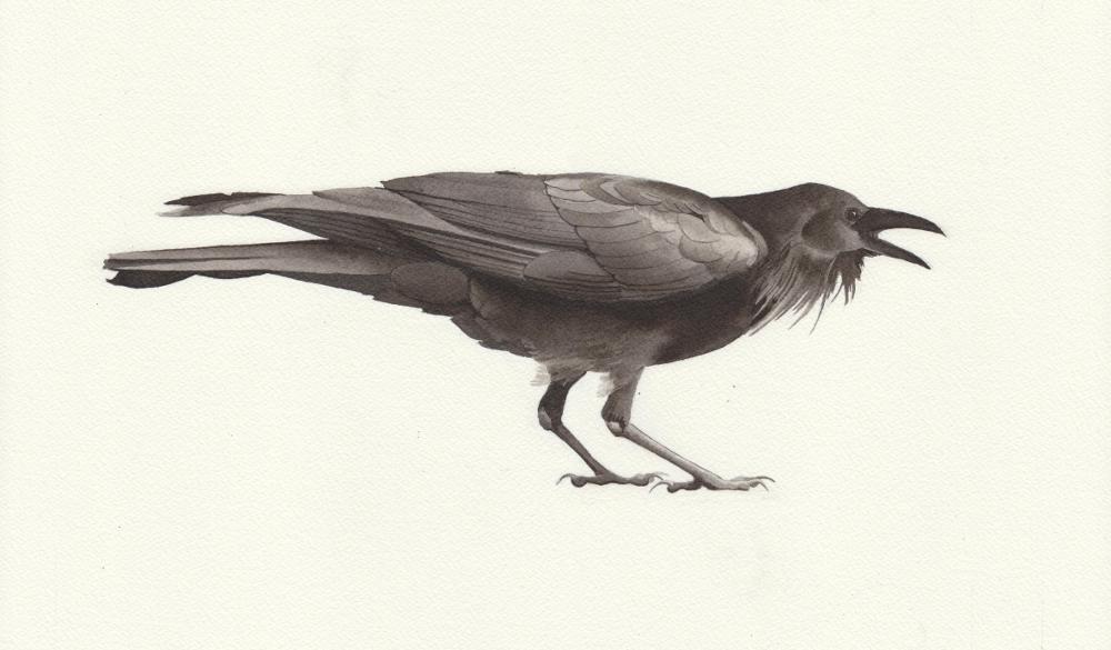 bird6a-reduced.jpeg