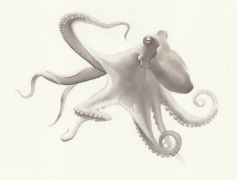 octopus1-reduced.jpeg