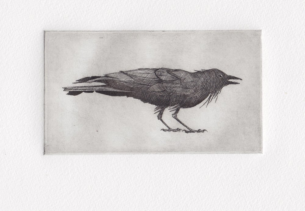Patt_Annie_11_Small Raven.jpg