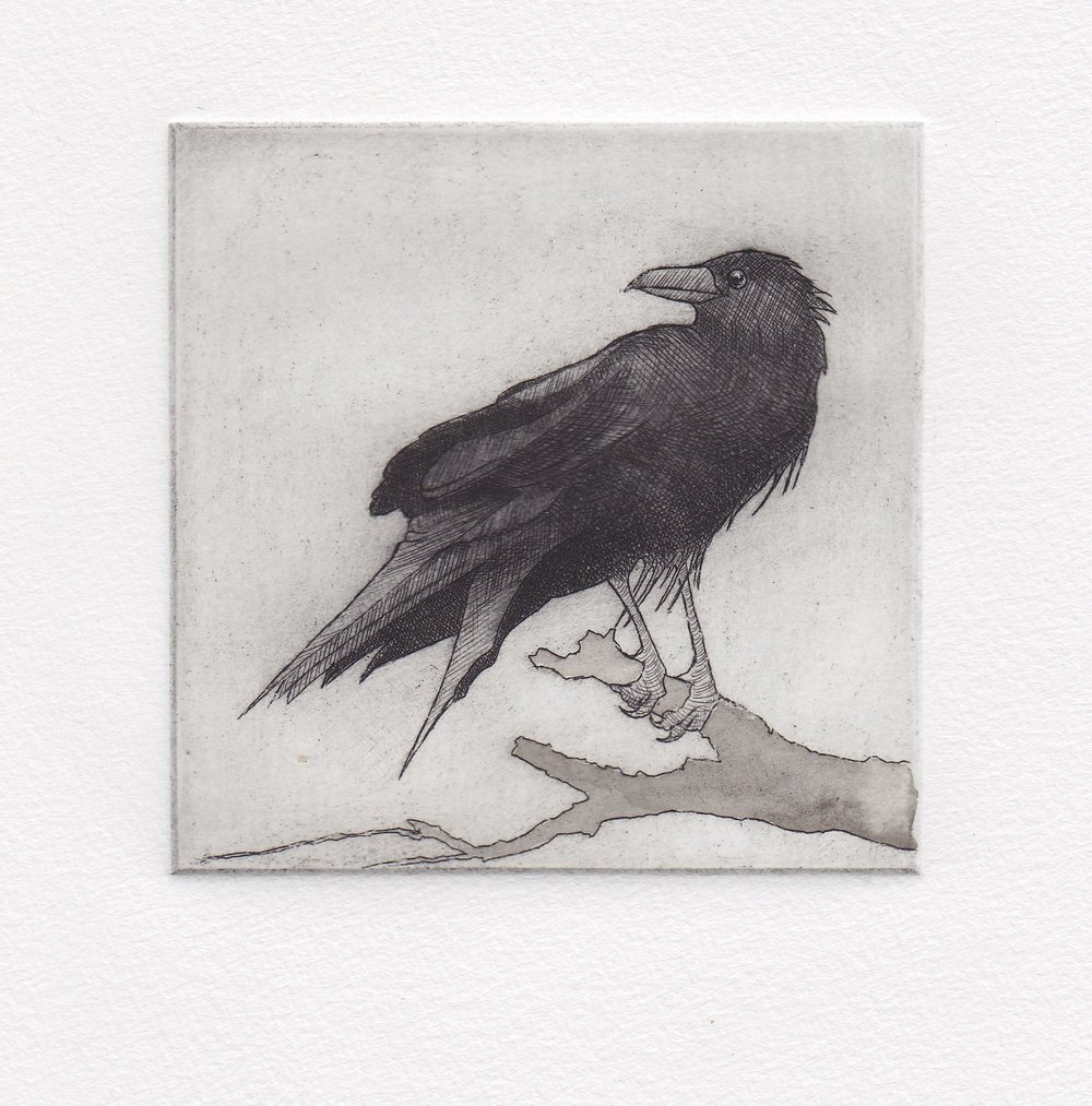 Crow - small looking over shoulder print.jpg