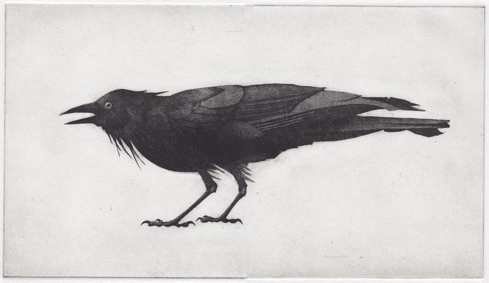 Large Crow.jpg