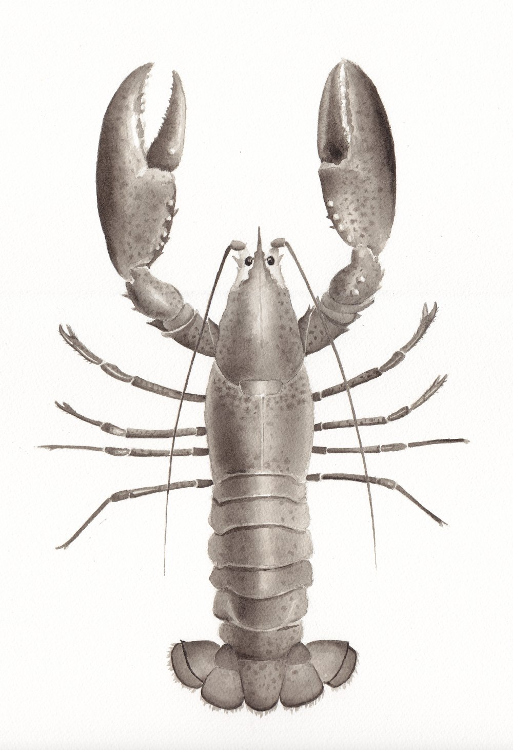 Lobster - small.jpg