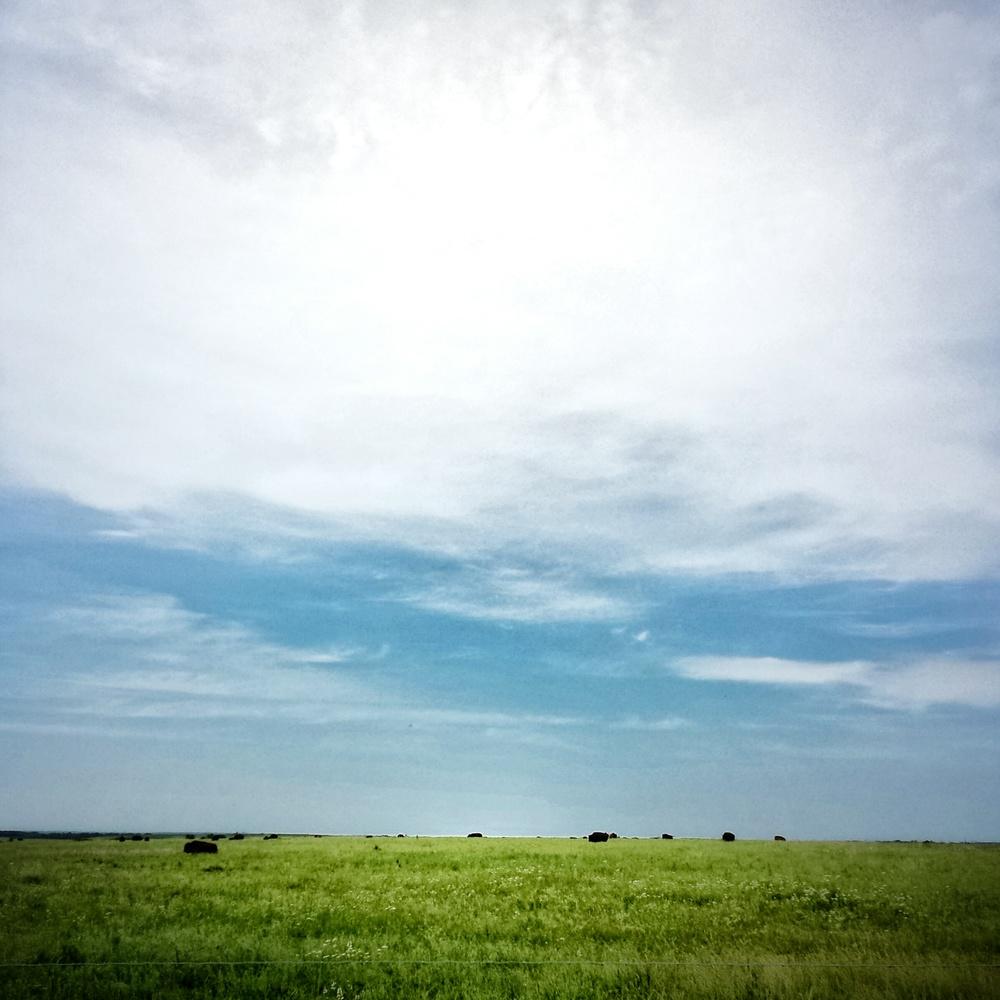 buffalo_prairiestatepark.jpg