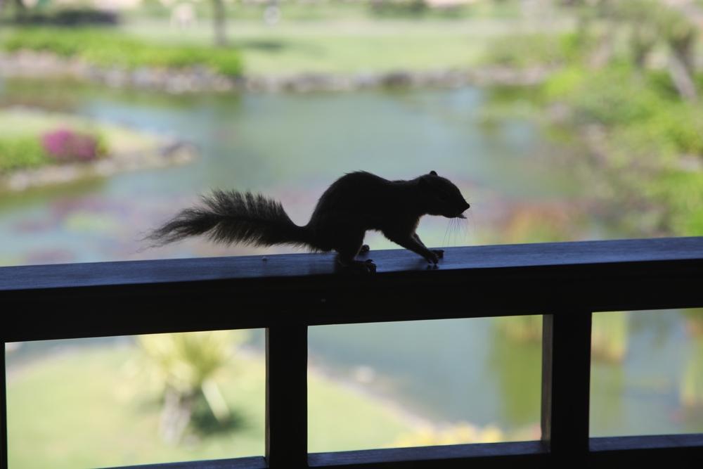 Little Squirrel at the Grand Hyatt Bali