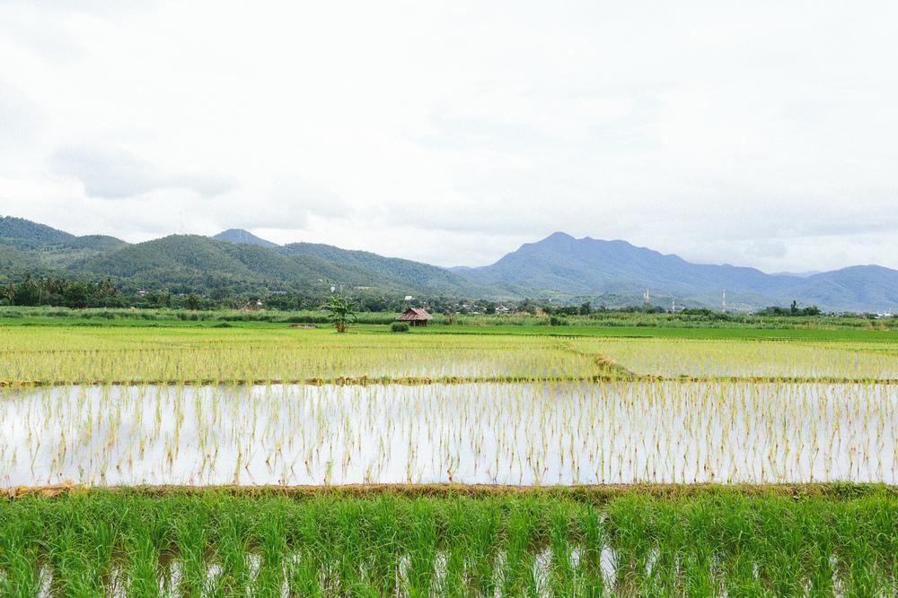Mae Hong Son Loop // Thailand