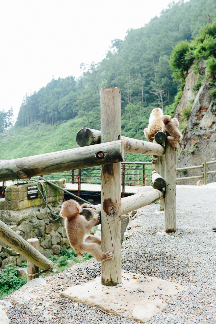 japan-monkey-park-0615.jpg