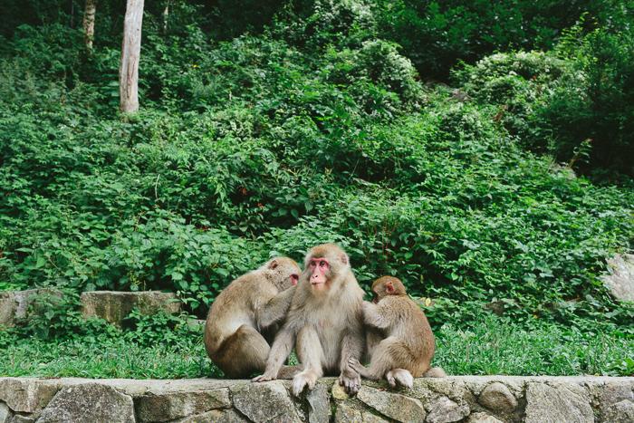 japan-monkey-park-0611.jpg