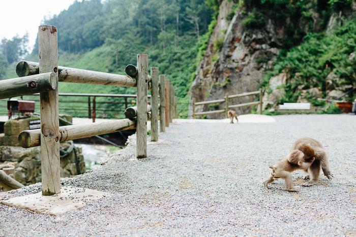 japan-monkey-park-0617.jpg