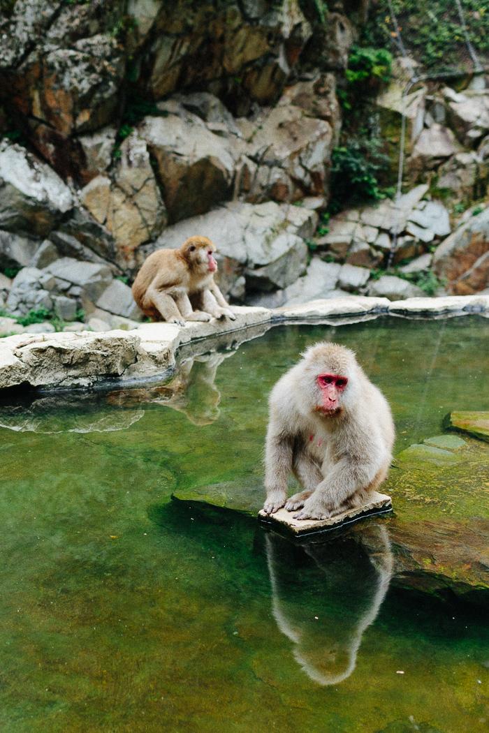 japan-monkey-park-0626.jpg