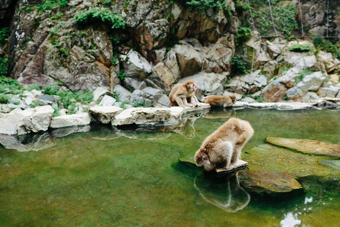 japan-monkey-park-0621.jpg