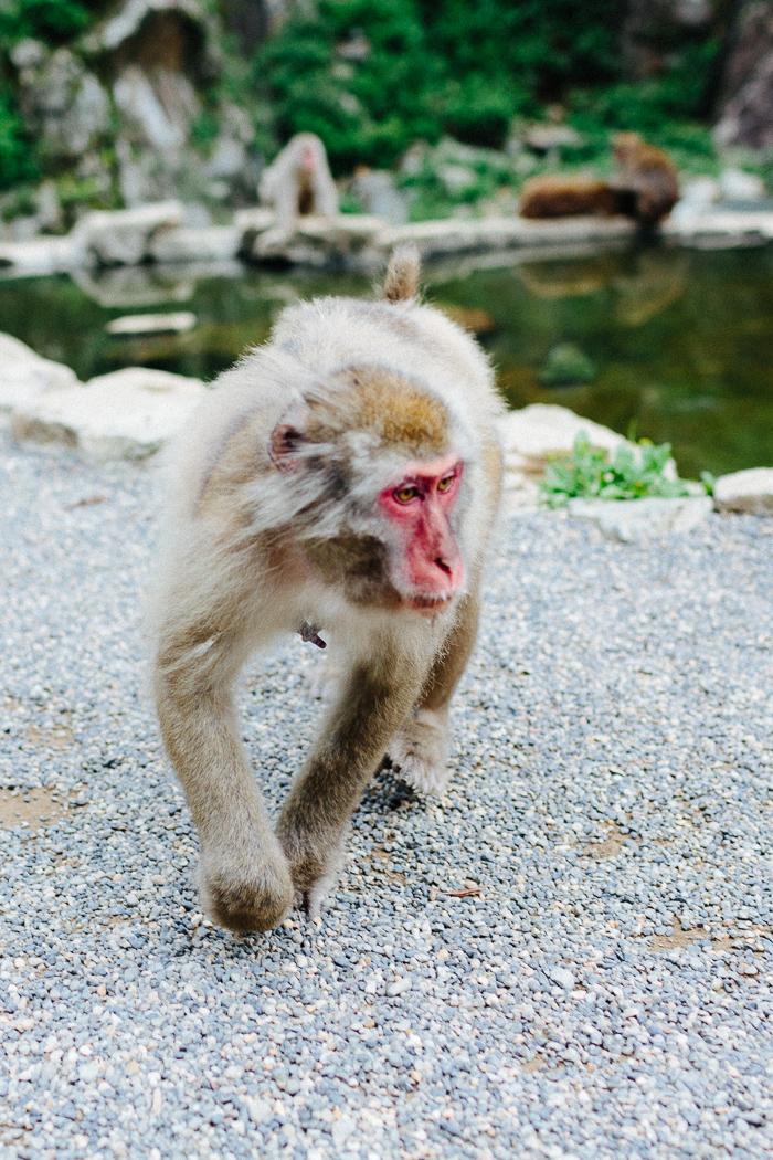 japan-monkey-park-0631.jpg